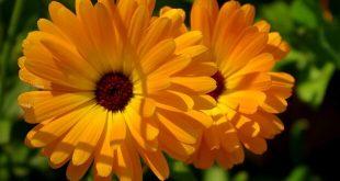 Makat çatlağı bitkisel tedavisi